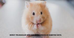 Hewat Peliharaan Imut Dan Menggemaskan Hamster Kecil