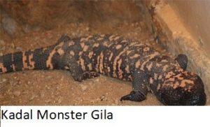 Kadal Monster Gila