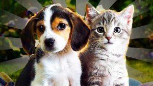 Kucing dan Anjing