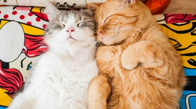 Kucing si Tukang Tidur
