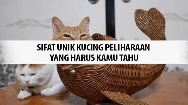 Sifat Unik Kucing Peliharaan