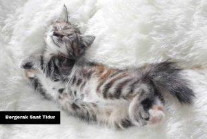Kenali Sinyal Ekor Kucing