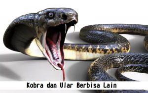 Kobra dan Ular Berbisa Lain