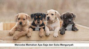 Kebiasaan Unik Anak Anjing Yang Harus Kamu Tahu Sebelum Memelihara