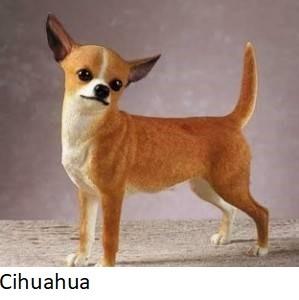 Cihuahua