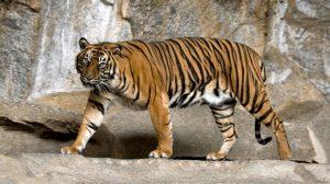 Spesies dan Ikon Nasional