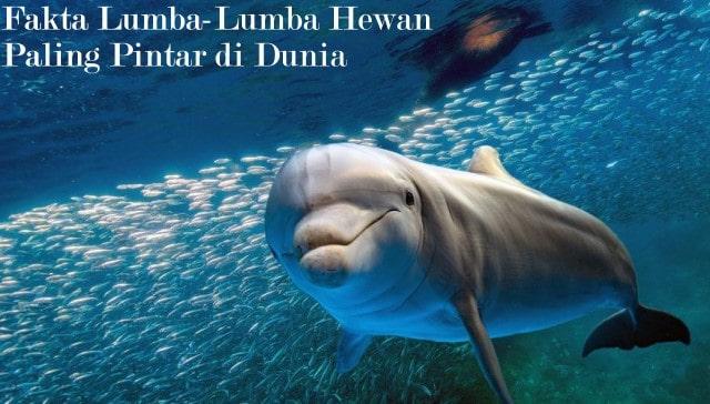 Fakta Lumba-Lumba Hewan Paling Pintar di Dunia